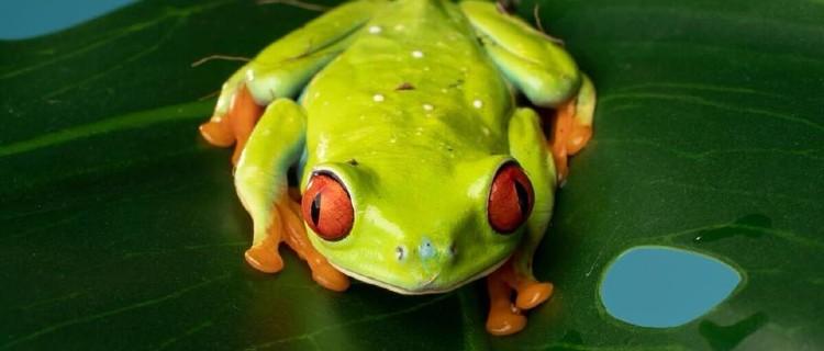 Animal Birthday Parties: Hands On Exotics