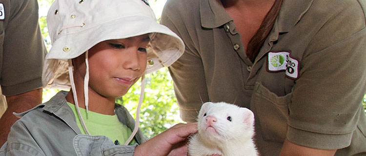 Hands-on fun for kids at the Toronto Zoo