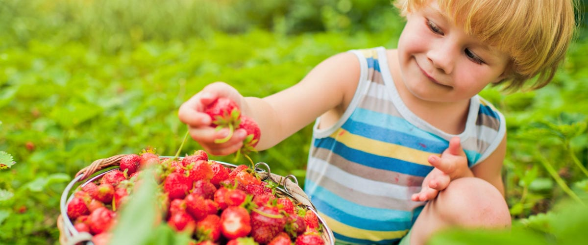 Best Berry Picking Farms for Kids in the Toronto Area