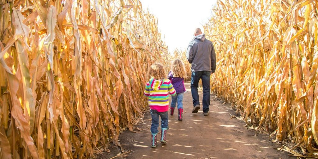 Article: Toronto-Area Pumpkin Patches and Corn Mazes