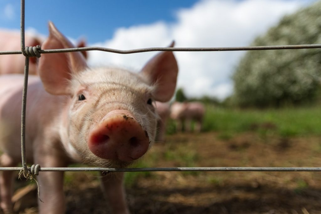Article: Farms and Petting Zoos for Kids in the GTA