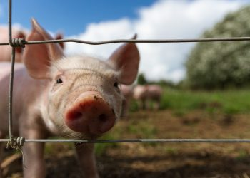 Petting Zoos and Farms for Kids in Toronto and the GTA