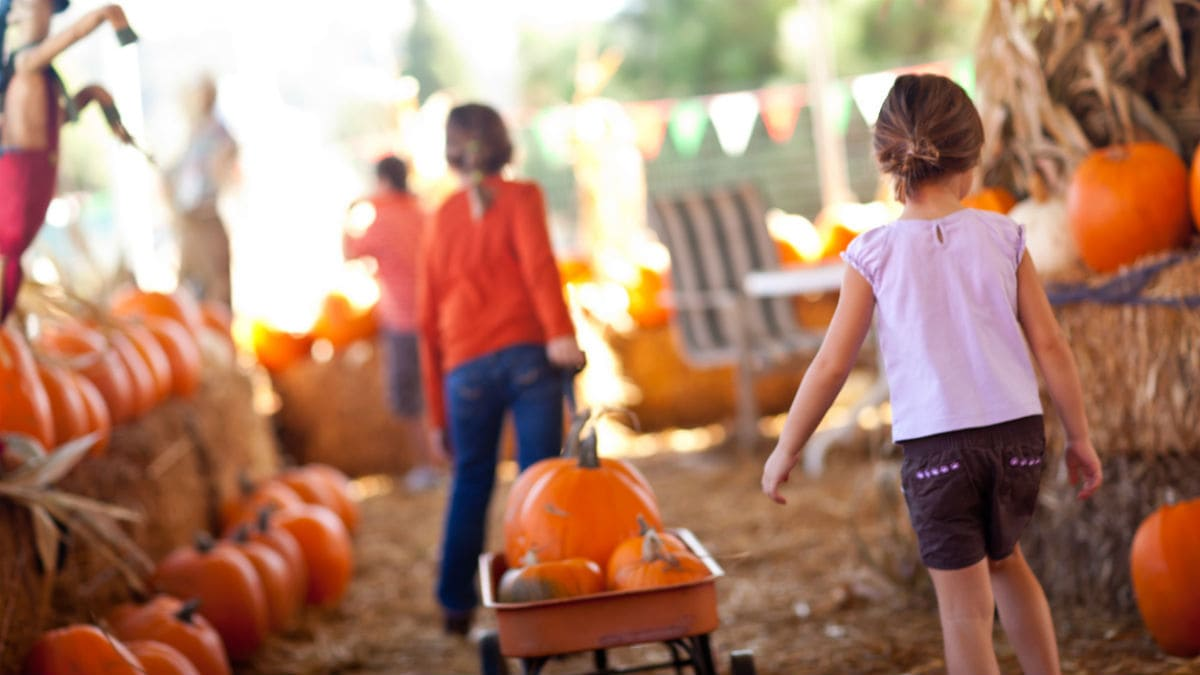 Fall Farm and Harvest Festivals in Toronto and the GTA