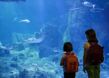 Attractions for Kids & Families