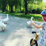 kid on bike with geese