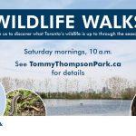 TTP Wildlife Walks poster
