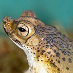 Spring Toad and Salamander Festival