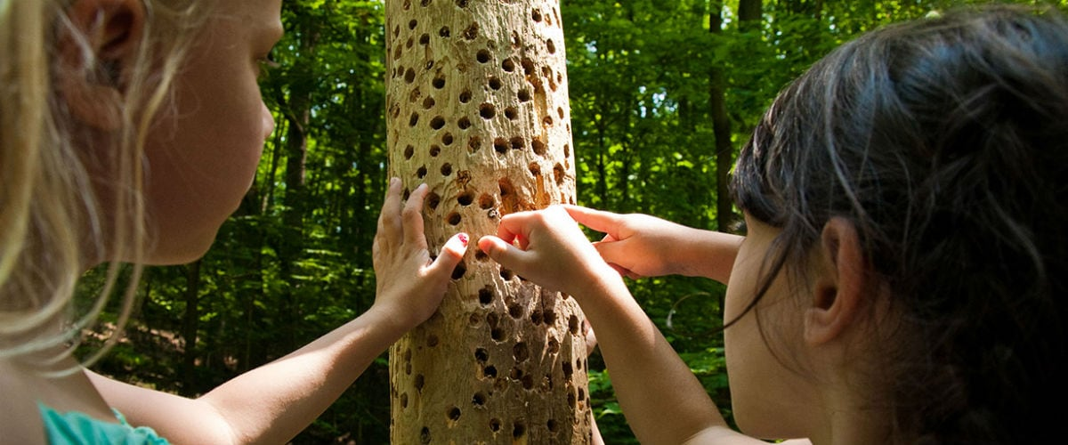 Kids Get an Eco Education at Kortright Centre for Conservation