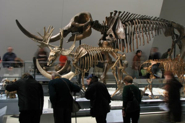 Guide to the ROM with Kids