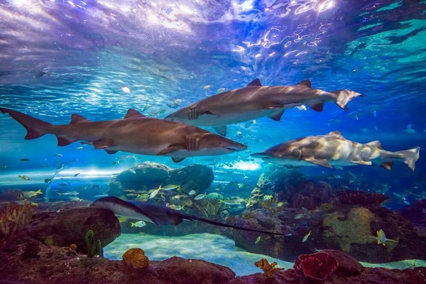 Insider Guide to Ripley's Aquarium of Canada