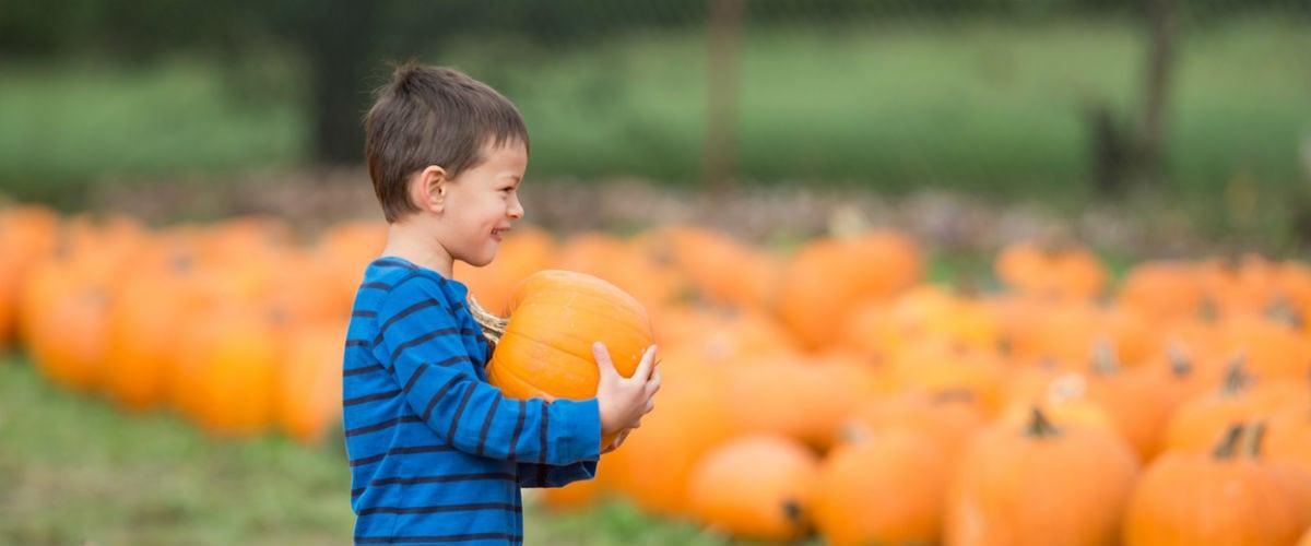 Fun Fall Farms for Hamilton Kids