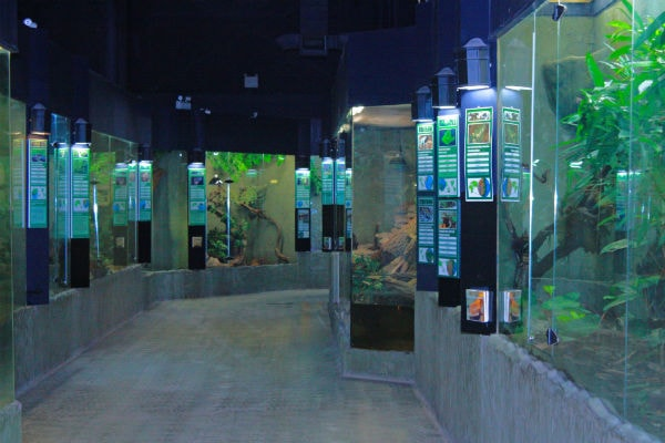 An Insider Guide to Canada's Largest Reptile Zoo