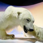 The Arctic Gallery is one of the museum's newest exhibits (photo: Ottawa Tourism)