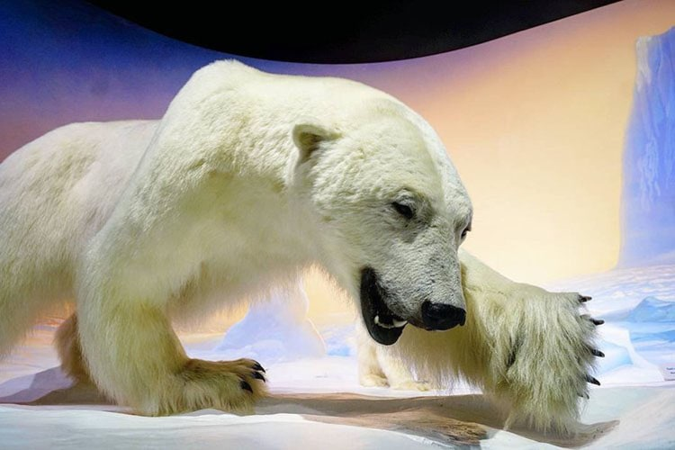 What To See and Do With Kids at the Canadian Museum of Nature