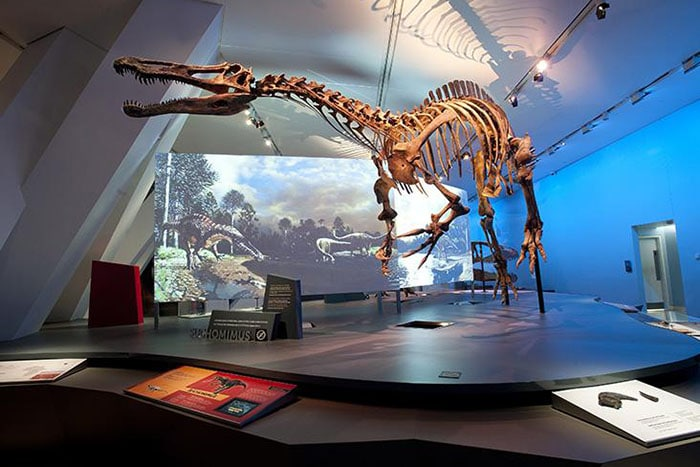 What You Should See and Do With Kids at Ottawa's Museum of Nature