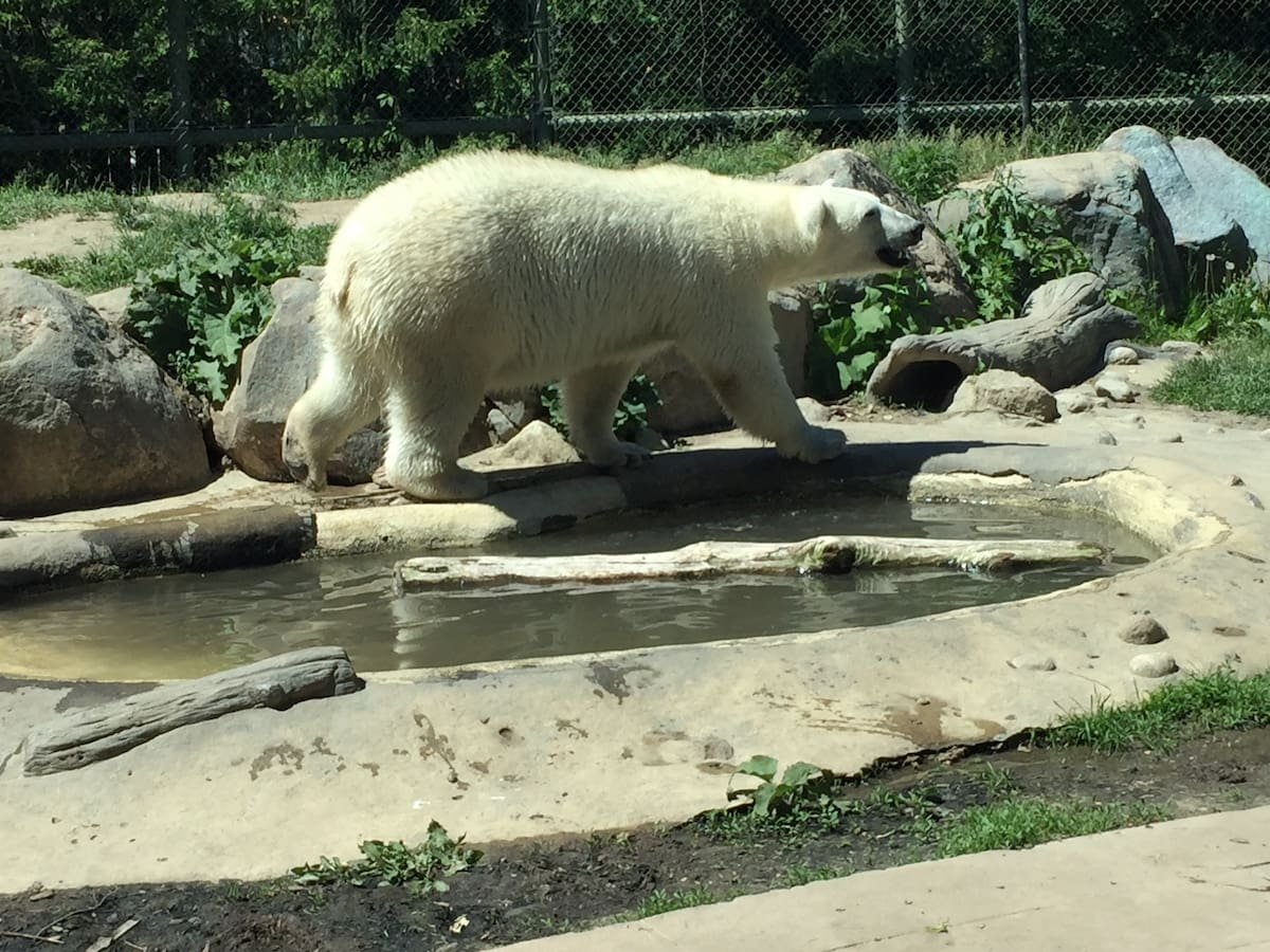 How To Spend an Awesome Day With Kids at the Toronto Zoo