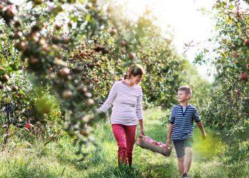 5 Ottawa Apple Orchards We Love