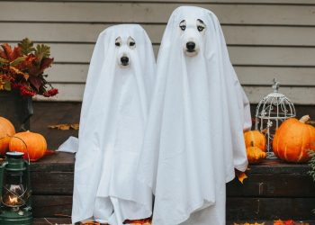 Spooktacular Family Halloween Events Happening Around the GTA