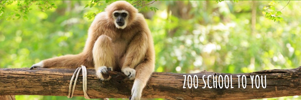 Online Learning: Toronto Zoo School To You