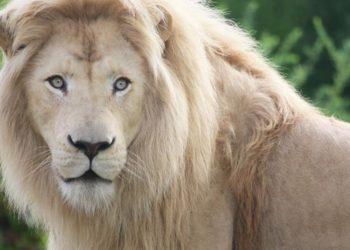 Toronto Zoo Opens New Drive-Through Scenic Safari