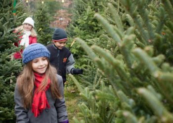 Best Places To Cut Your Own Christmas Tree Near Toronto (With Kids!)