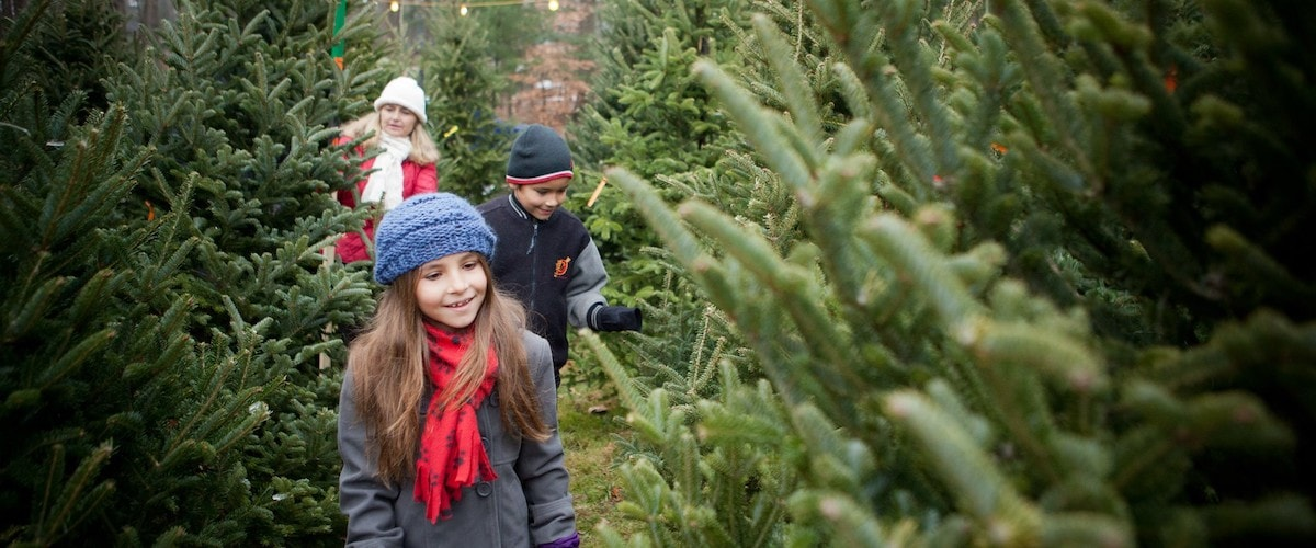 two children and mother walk through Christmas tree farm