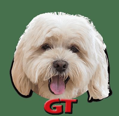 Game Trucks GT